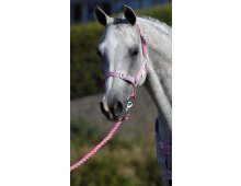 Halters  Have a look at our new Supreme Horseware Nylon Halters They are basic but a great fit and value for money We offer the hard to find sizes like Sm PonyWe. Please Click the image for more information.
