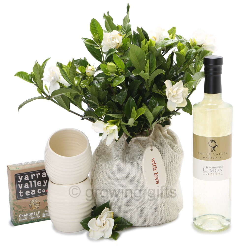 bonsai gardenia care instructions