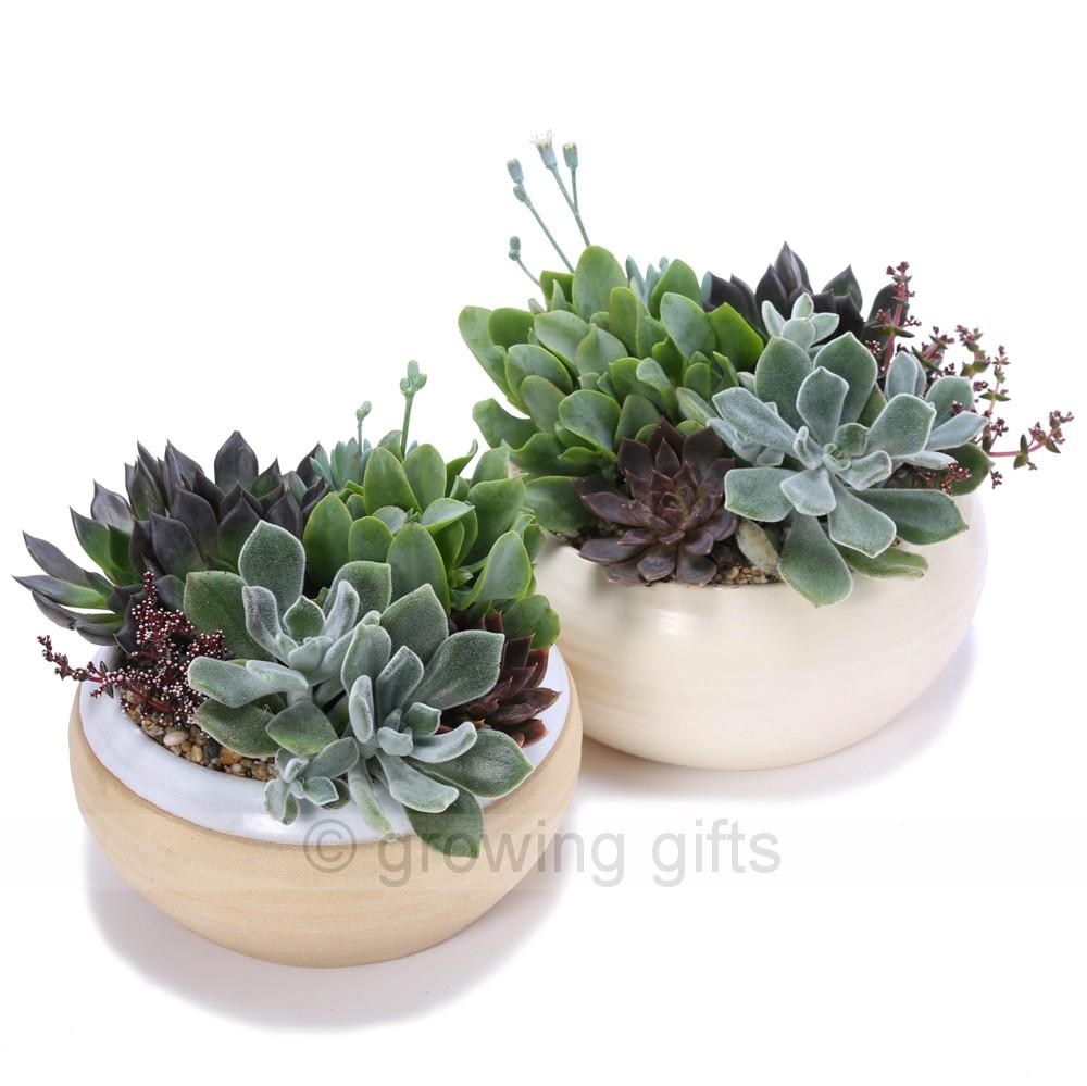 indoor succulent care instructions
