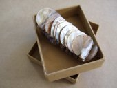 Shell Bracelet boxed  Please Click the image for more information.