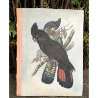 Australian Black Parrot Journal A3 Designed by NERO and inspired by the natural beauty of the Adelaide Hills in South Australia this beautiful native black parrot design is hand printed on a hand made papers cover  with leather bindingP. Please Click the image for more information.