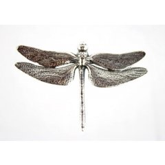 Australian Made Dragonfly Brooch Pewter Core with quality STG Silver Plating Finish This beautiful Brooch is functional durable and eye catching with a strong Brooch pin at the backMade. Please Click the image for more information.