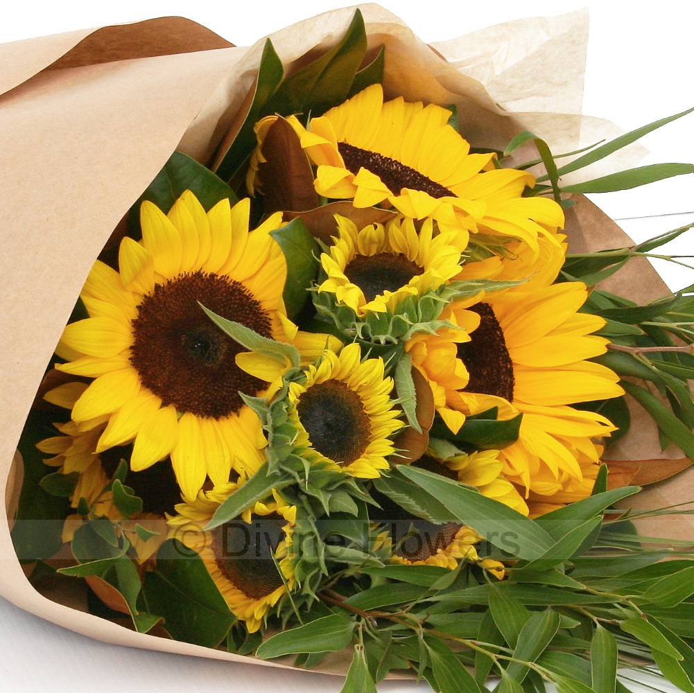 Sunflowers sunflower delivery brisbane local northside
