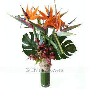 Product Image for Bird of Paradise