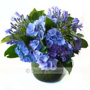 Product Image for Amethyst Agapanthus & Hydrangea