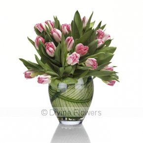 Product Image for Tulip Fever (more colours)