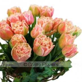 Product Image for Peony Tulips