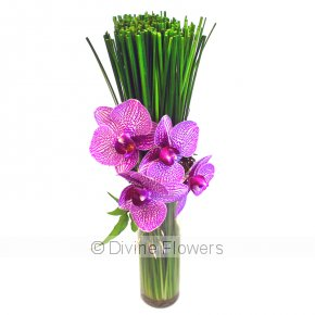 Product Image for Orchid Reed Vase