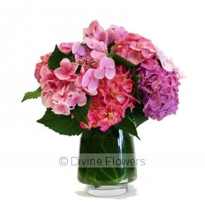 Product Image for Hydrangea Vase