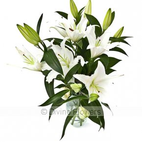 Product Image for Sympathy Lilies