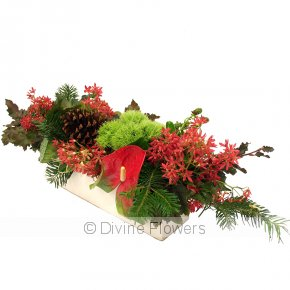 Product Image for Traditional Christmas Flowers