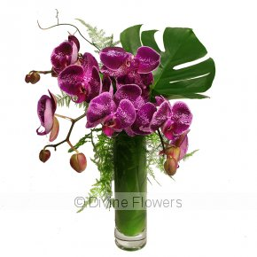 Product Image for Phalaenopsis Orchid Vase