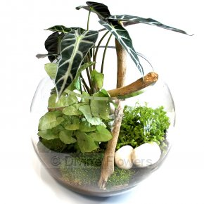 Product Image for Terrarium 25cm