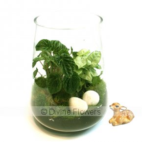 Product Image for Woodland Creature Terrarium