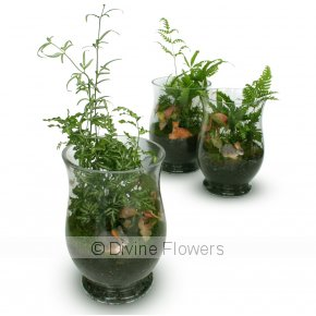 Product Image for Terrarium Wind Light