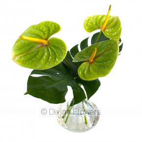 Product Image for Menthe