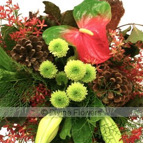 Product Image for Christmas Flowers