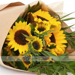 Product Image for Sunflowers