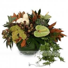 Product Image for Botanical Native Vase
