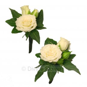 Product Image for Boutonnière Ivory/White Spray Roses