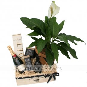 Product Image for House Warming Hamper with Moet