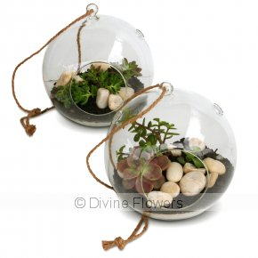 Product Image for Hanging Succulent Garden