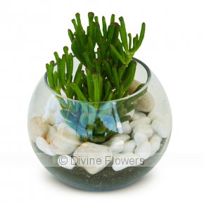 Product Image for Succulent Sphere