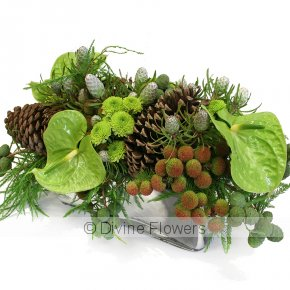 Product Image for Native Christmas Flowers