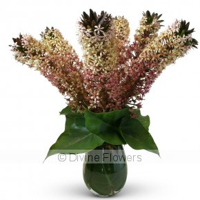 Product Image for Pineapple Lily Vase (Eucomis)