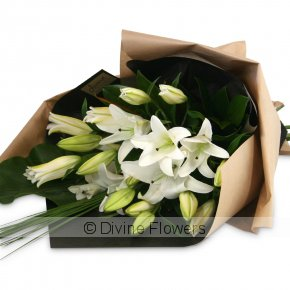 Product Image for Oriental Lilies (more colours)