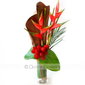 Product Image for Heliconia Crab Claw