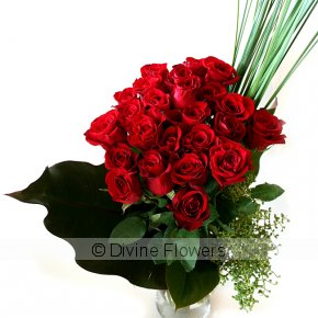 Product Image for Red Beauty Roses